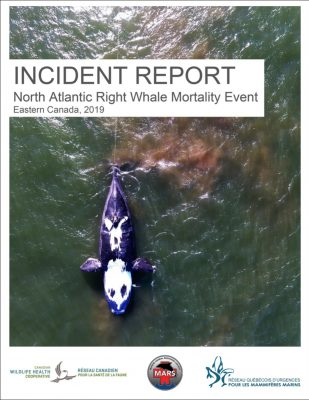 2019-Incident-Report_outline