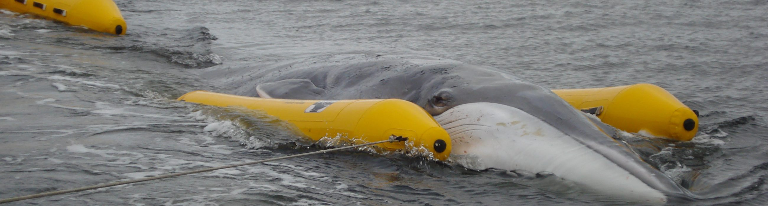 MARS - 2013-11-14 fin whale 8